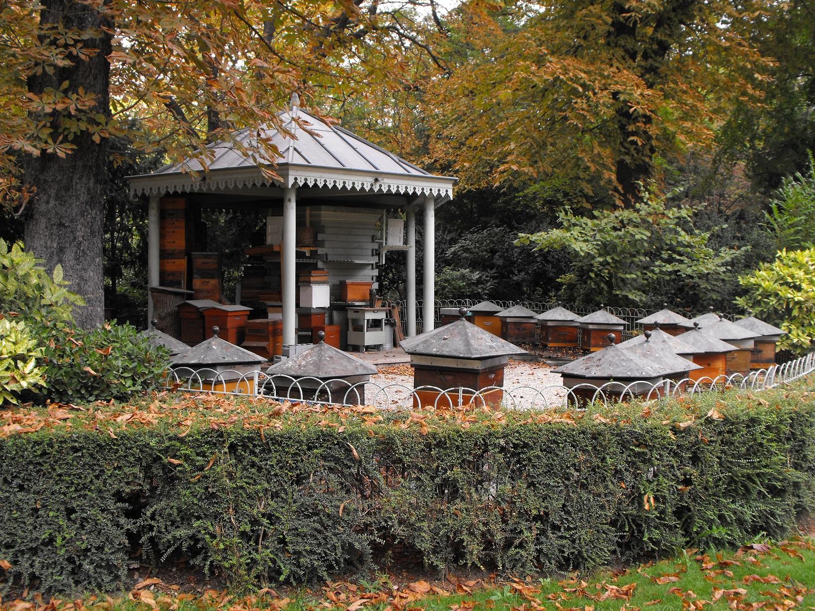 Une ann e au rucher du jardin du luxembourg soci t for Au jardin du luxembourg
