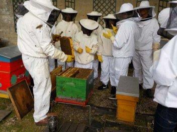 Visite au rucher